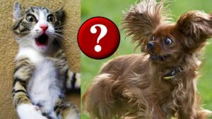 freaked out cat and dog - humor