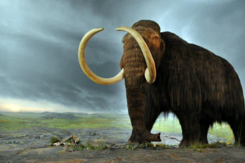 wolly mammoth