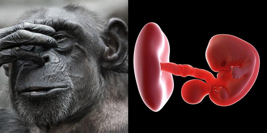 Scientists Create Monkey-Human Chimeric Embryos