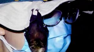 new footage of live bats in Wuhan lab