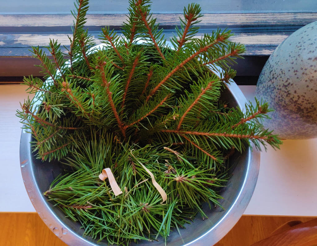 pine and spruce needles for tea against spike proteins Covid vaccine