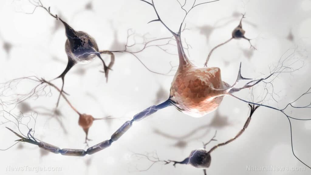 Neurons NervousSystem INBRAIN Neuroelectronics Secures $17 Million in Series A Funding for First AI-Powered Graphene-Brain Interface