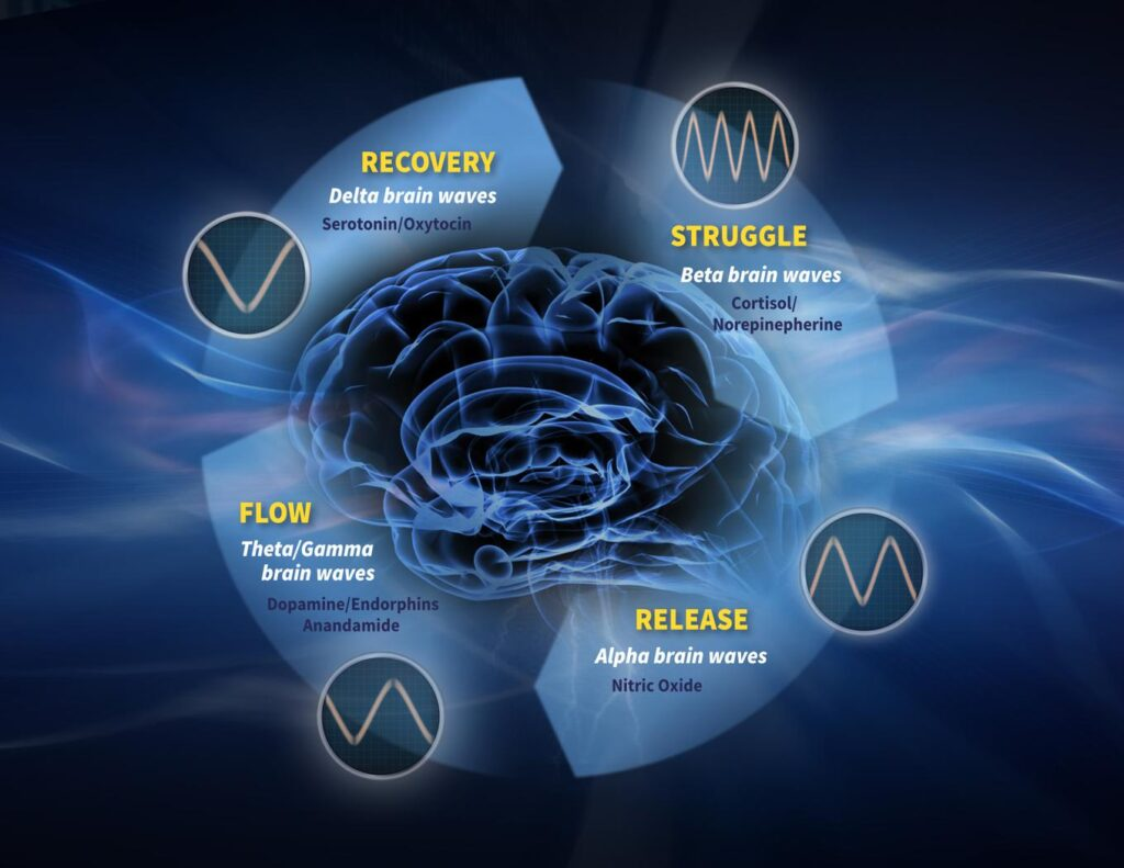 The flow cycle of brain waves
