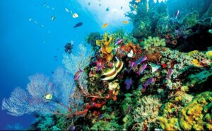 Great Barrier Reef recovery in 2021