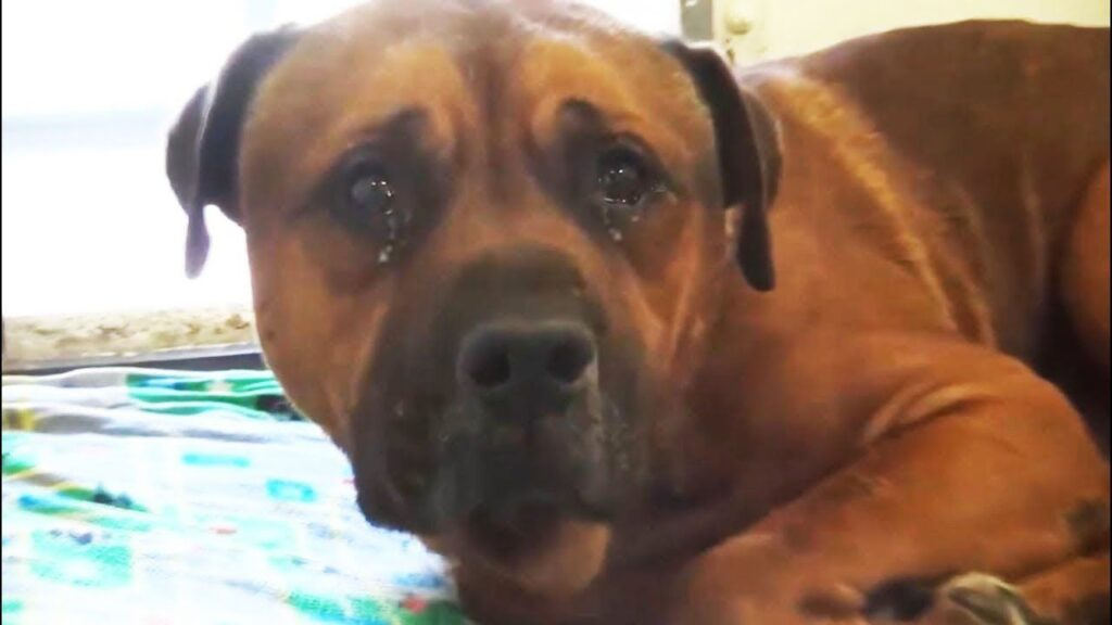 heartbroken dog crying after being abandoned